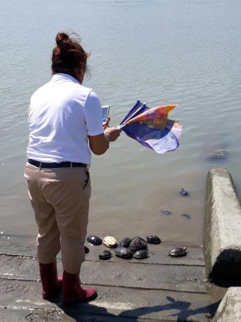 圖3.放生者將淡水龜放在水邊並拍照留念。