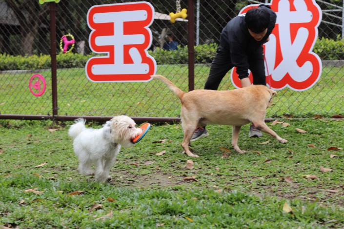 圖10-犬隻行為訓練師帶著狗狗依寶及MOMO示範犬隻園區內互動及遊戲建議.JPG