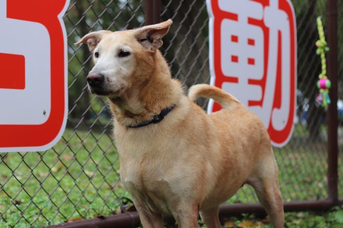 圖12-MOMO邀請各位毛朋友一起來玉成公園狗活動區運動.JPG