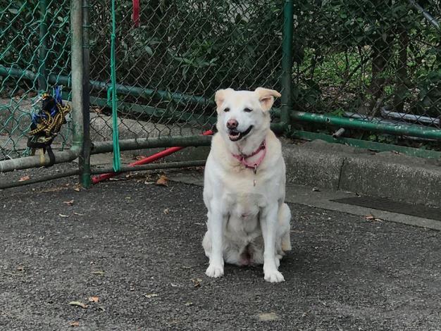 圖2.動物之家銀齡犬隻等你認養給予保障