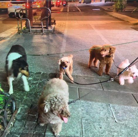 圖2、飼主如今只能透過照片重溫帶著狗狗們開心出遊的美好回憶。