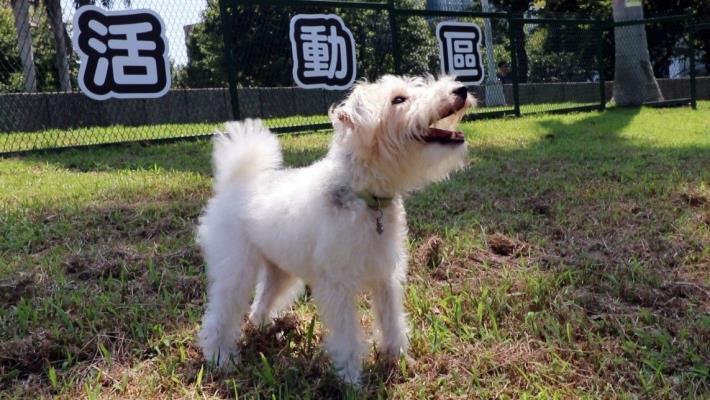 圖2 狗狗開心於北勢湖公園狗活動區玩耍