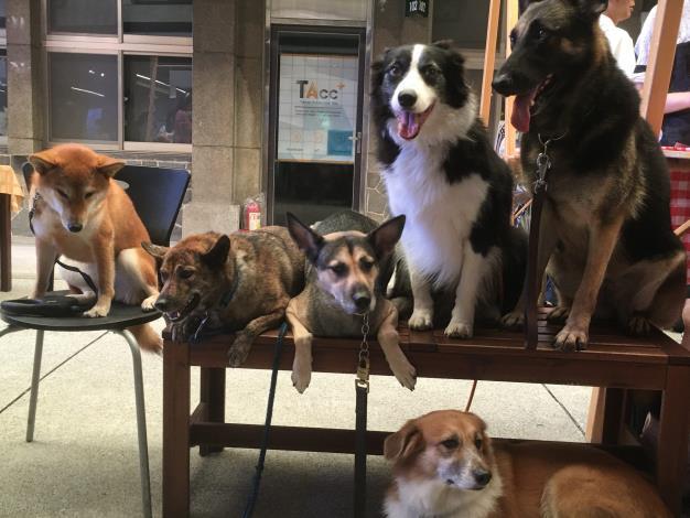 圖6、現場許多訓練有素的陪伴犬一同參與臺北世界動物日
