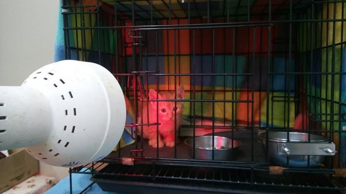 圖2、幼貓舍開啟保溫燈禦寒