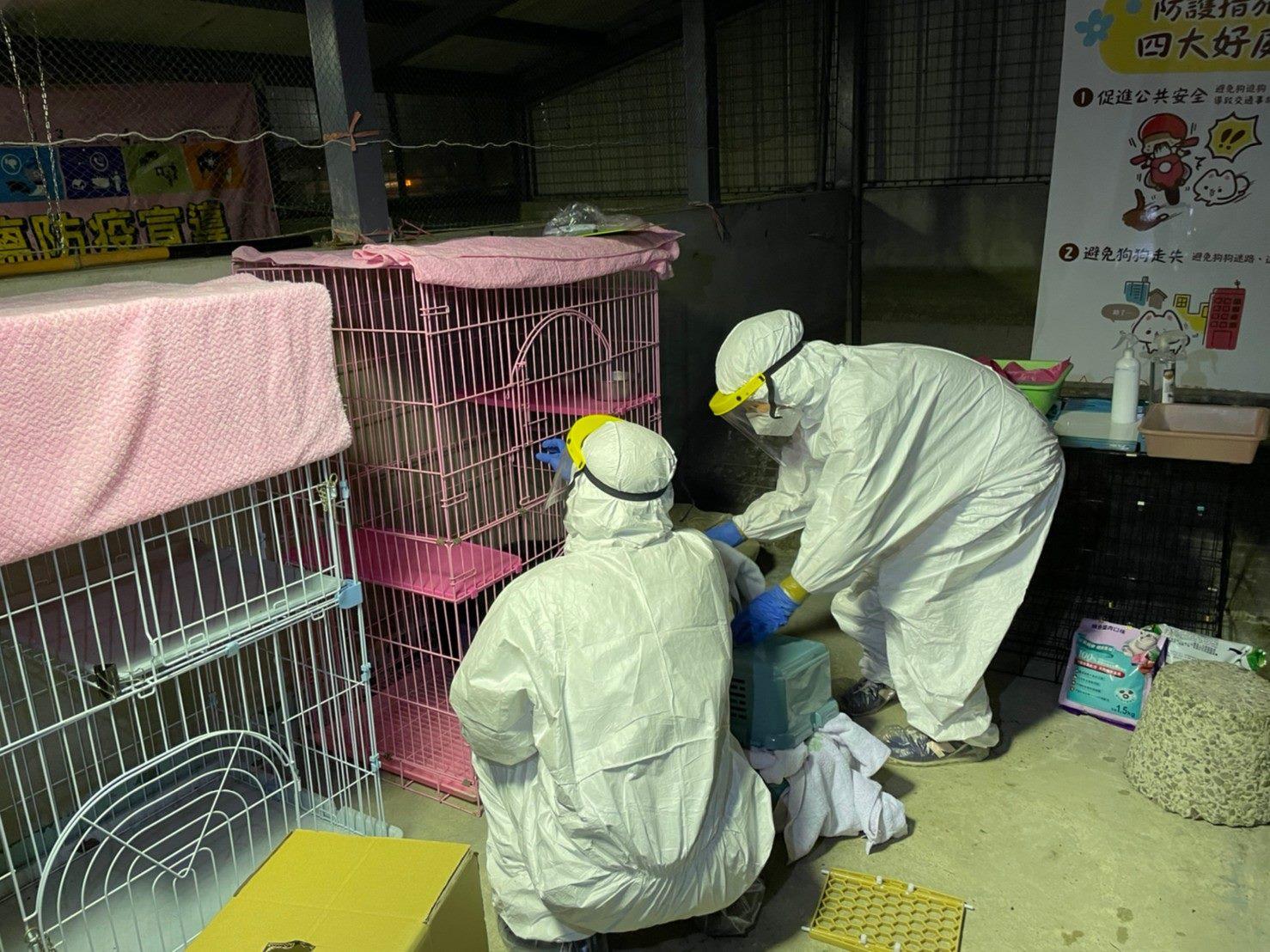 圖2.確診案例飼養之貓隻目前隔離安置於北市動保處