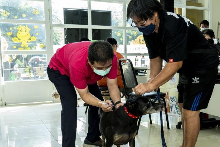 圖1.市民帶狗狗參與「萬箭齊發」狂犬病疫苗注射活動