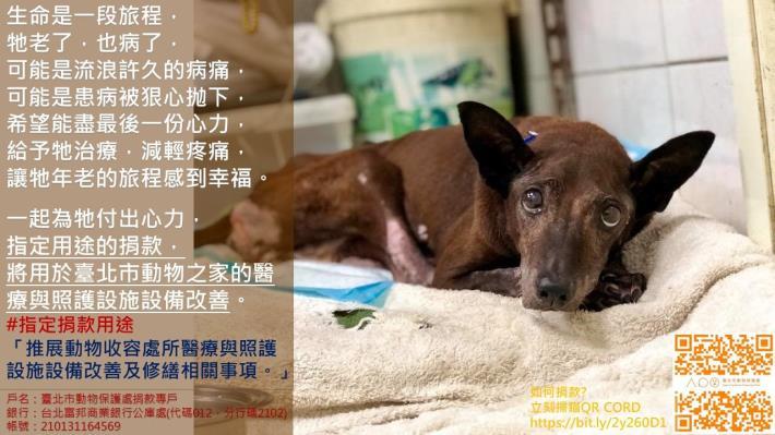 指定用途第1款-臺北市動物之家醫療與照護設施(備)改善.JPG