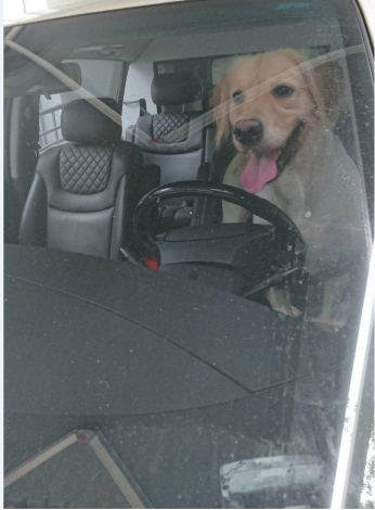 Photo_1_dogs_cannot_be_left_in_the_car_alone..PNG