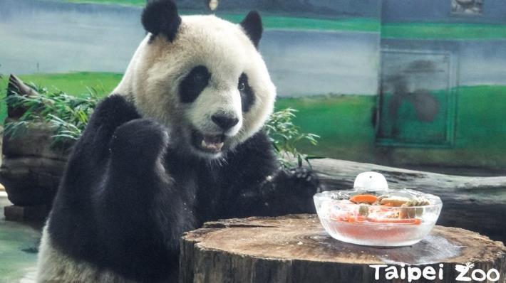 「旺」事如意賀新年~大貓熊家族開心享用新年大餐!