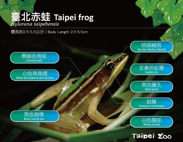 臺北赤蛙燈謎擂臺~等您來挑戰!(Taipei Zoo)