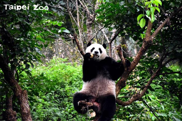 種樹減碳愛地球~募集發票作公益!(Taipei Zoo)
