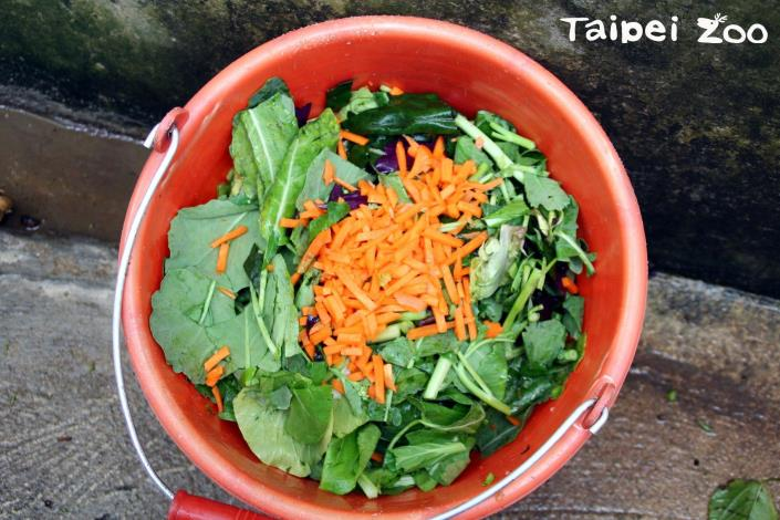 平常緬甸星龜的伙食為一天桑葉和一天蔬果的方式交替餵食