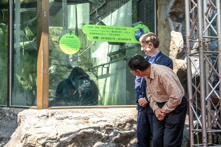 金剛猩猩「寶寶」遠赴荷蘭〜柯文哲市長主持歡送會!