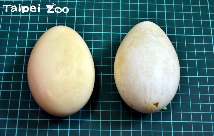「假蛋工廠」運轉中~細節藏在蛋蛋裡