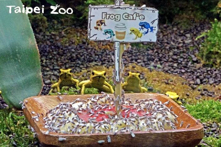 動物園兩棲爬蟲動物館「Frog Café」正式開張囉![開啟新連結]