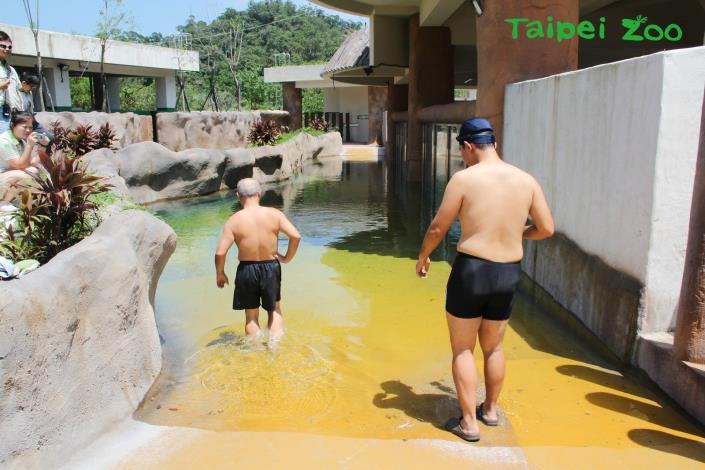「河馬浴場」於完工啟用前,保育員曾親自下水測試坡度[開啟新連結]