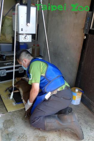 行動動物健檢的項目,也包括照X光[開啟新連結]