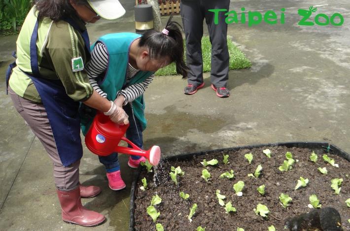 動物園同仁利用動物排遺,製作糞便堆肥來栽種蔬果