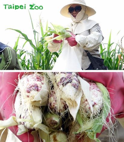 臺北市立動物園為動物們上菜囉!今年最夯的年菜,就是用自製肥料、自家栽種、無毒、健康的永續食材