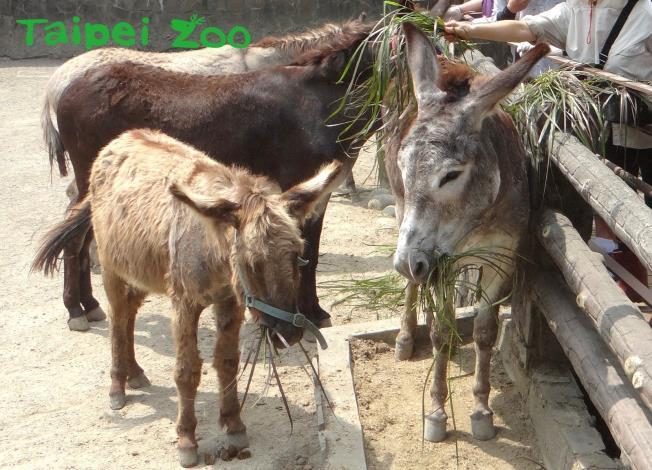 動物米其林餐廳著重的並不是烹調技術,而是食材的天然品質(家驢)