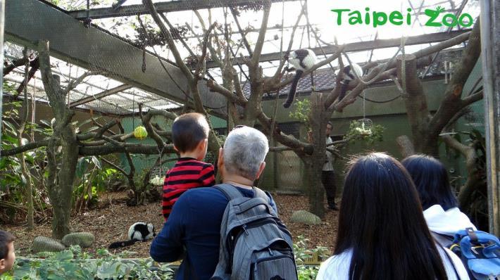 兒童動物區狐猴戶外活動場汱換前方的老舊框架與波浪網,換成透視度較高的龜甲網,讓民眾能更清楚的觀察動物的一舉一動