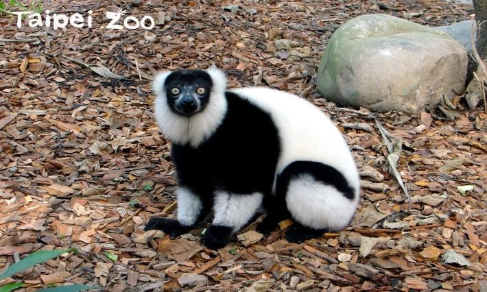 大家記得常來兒童動物區拜訪我們哦!