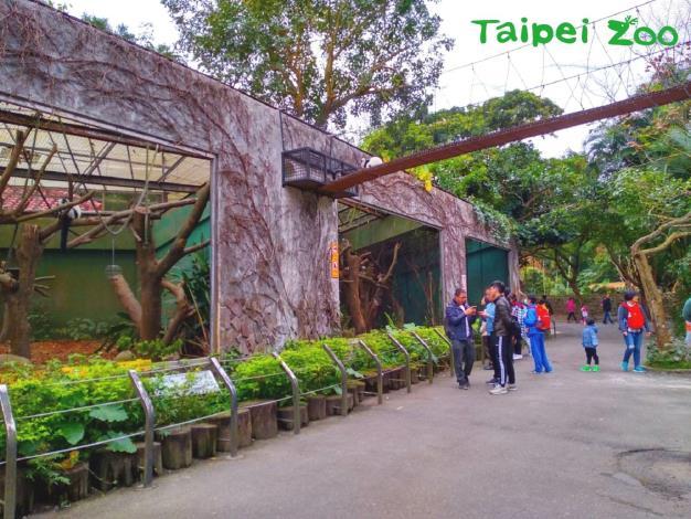 下次有機會造訪兒童動物園區,路過狐猴活動場時,記得擡起頭看看上方的廊道,或許剛好有狐猴經過唷!