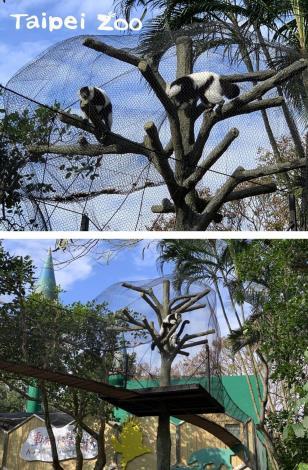 「動物空中走道」中途設置了樹屋,讓活潑好動的狐猴們可以在此處暫時停留(上圖:劉聰毅提供、下圖:彭仁隆提供)