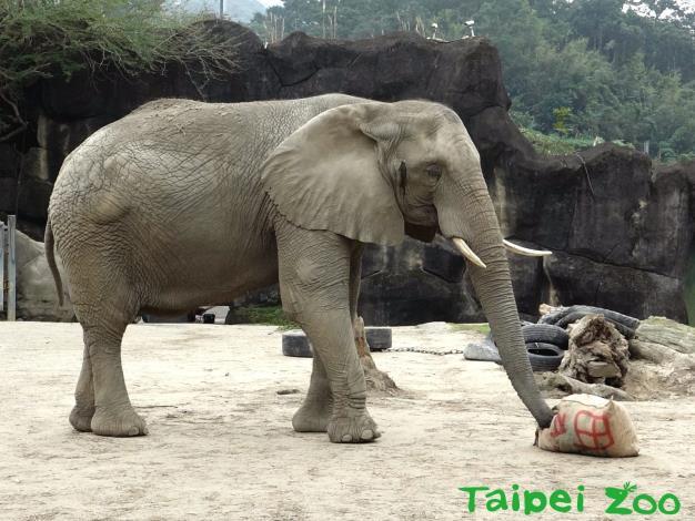 6月間連續10天不開放~動物園積極整裝再出發!