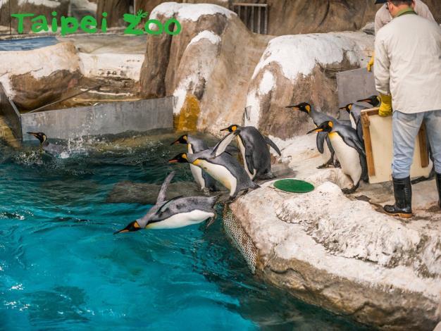 企鵝護足靠創舉—健康步道立大功