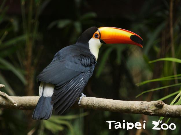 「貨架上的雨林」亮相-呼應生物多樣性日