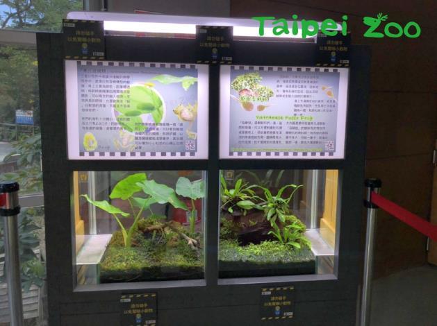 臺北市立動物園兩棲爬蟲動物館有新朋友跟大家見面囉!「玻璃蛙」和「苔蘚蛙」聯合現身