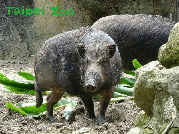 歡迎大家趁著2019年的尾聲,來親眼看看這群「豬隊友」們吧!