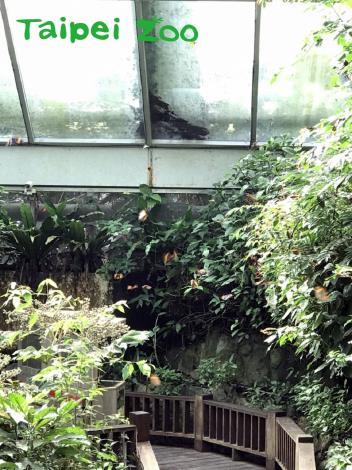 只要氣溫一回暖,在臺北市立動物園昆蟲館的生態網室,就可以看到蝴蝶翩翩起舞