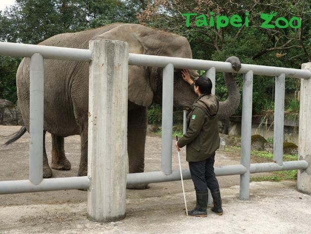 臺北市立動物園使用的訓練方式,是以正向鼓勵方式引導動物做出動作(詹德川攝)