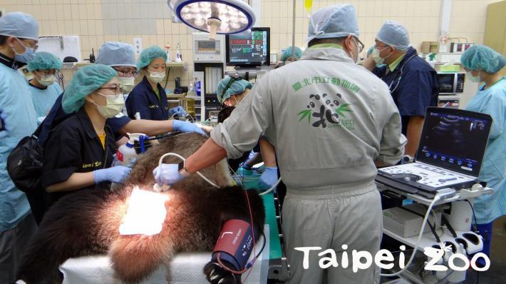 大貓熊繁殖的工作團隊包括了保育員、獸醫師及多位專家