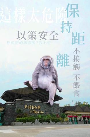 保持距離以策安全_臺灣獼猴