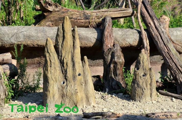 土丘上還有一些孔洞,原來是特別為了大食蟻獸「口袋莎」所設置新的行為豐富化設施
