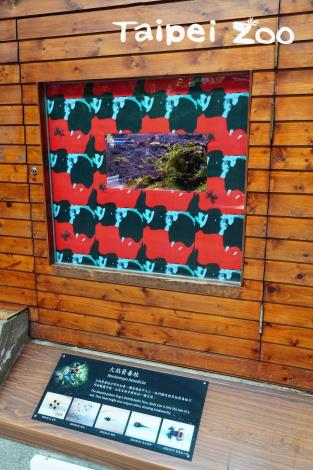 火焰箭毒蛙已經正式在兩棲爬蟲動物館和遊客見面囉!