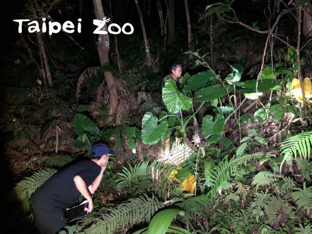 動物園內的生命力 蛙類調查成果驚豔