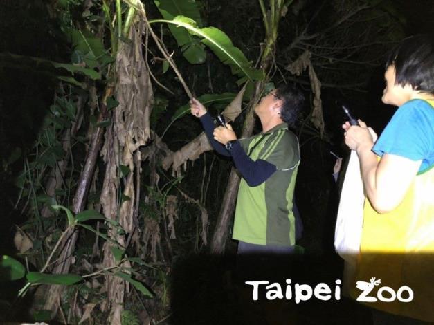 每個月的第二個週五的晚上,研究人員帶領志工朋友們,在動物園內各處進行野外蛙類調查