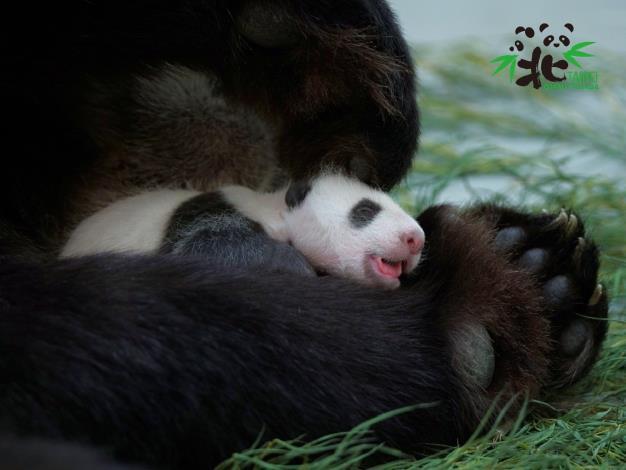 睡在媽媽懷裡好安心!