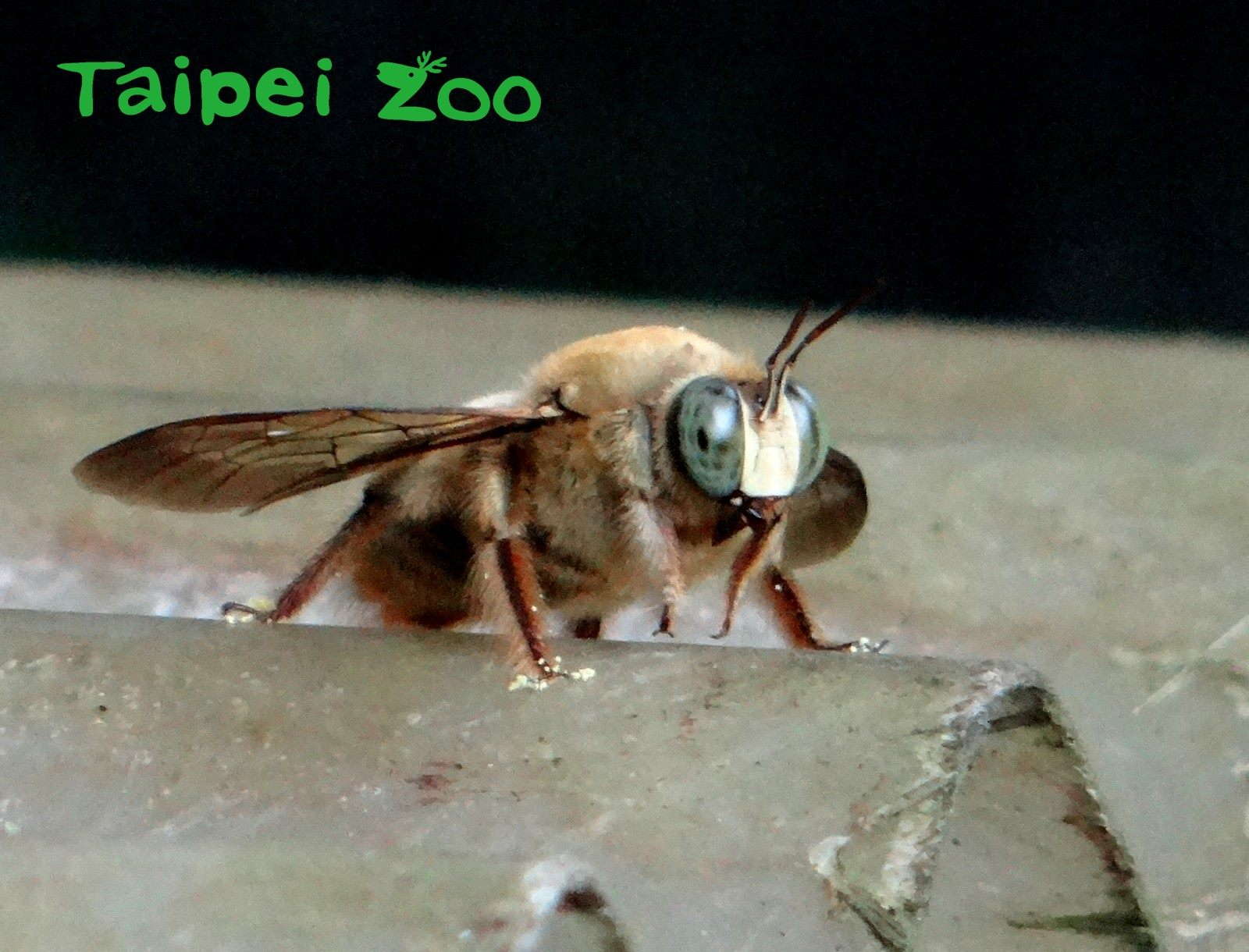 近幾年因為農藥、氣候變遷等關係,造成蜜蜂大量死亡的情況產生