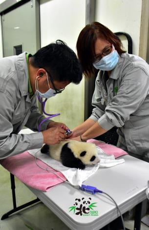 為了不要太影響到動物的作息,整個體檢過程會在10分鐘內結束(8月13日)