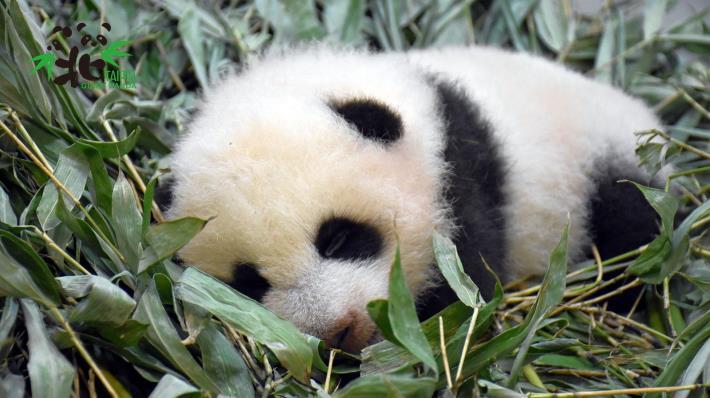 「圓寶」相對「圓仔」小時候乖巧溫順許多,不過可能只是每次檢查都很想睡覺