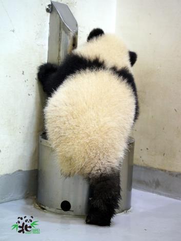 保育員:「圓寶」~不可以玩媽媽喝的水!「圓寶」:哦~~(被發現了!)