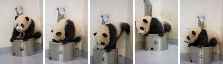 「圓寶」:奇怪了!誰可以告訴我,我為什麼坐不進「水盆君」呢?!