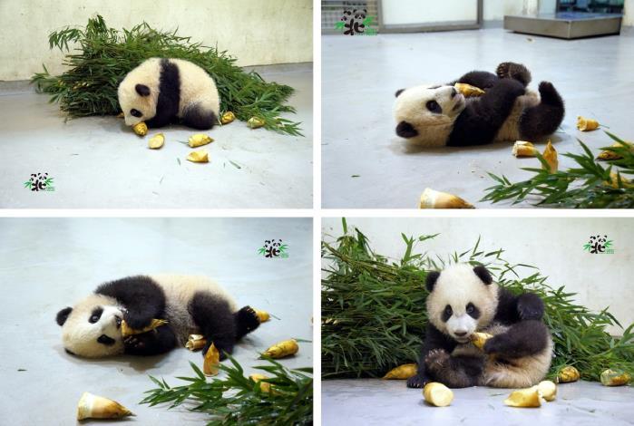 我趴著吃、躺著吃、側著吃…還用腳吃,厲害了吧!
