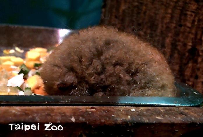 小懶猴活動場怎麼多出一顆奇怪的小毛球,被單獨放在棲架上???