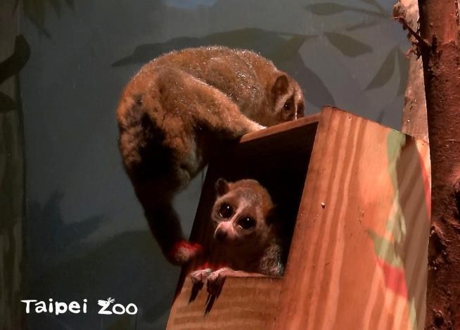 小懶猴媽媽:親愛的,我們是不是少了什麼呀???小懶猴爸爸:有嗎?我想不起來耶!